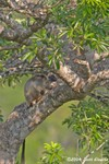 CRW_0711tree_roo.jpg